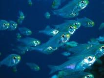 De vissen van het glas royalty-vrije stock foto