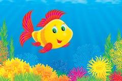 De vissen van het koraal Royalty-vrije Stock Afbeelding