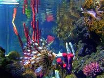 De vissen van het koraal Stock Afbeeldingen