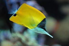 De vissen van het koraalrif Royalty-vrije Stock Foto's
