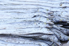 De vissen van het lint royalty-vrije stock afbeeldingen