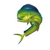 De Vissen van Mahimahi Royalty-vrije Stock Afbeeldingen