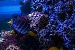 De vissen van Nice in blauw water dichtbij rif Royalty-vrije Stock Afbeeldingen