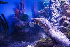 De vissen van Nice in blauw water dichtbij rif Royalty-vrije Stock Foto's