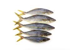De vissen van de regenboogagent op witte achtergrond royalty-vrije stock afbeelding