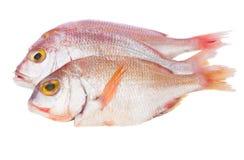 De vissen van Sama stock afbeeldingen