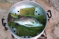 De vissen van stoom overzeese baarzen Royalty-vrije Stock Foto