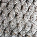 De vissen van textuurschalen Royalty-vrije Stock Afbeelding