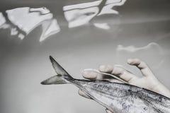 De vissen vangen witte hand Aquatisch ogenblik royalty-vrije stock afbeeldingen