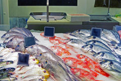 De vissen verzetten tegenzich Stock Foto