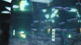 De vissen zwemmen in een aquarium onder water stock videobeelden