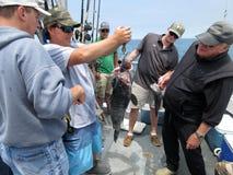 De vissenpool weegt binnen Stock Fotografie
