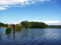 De visser knie-diep in water vist bij riet Royalty-vrije Stock Afbeeldingen