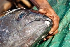 De visser toont een tonijn bij de markt Stock Foto's