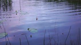 De visserij van vlotter in het meer stock video