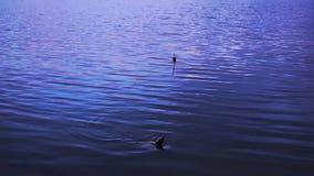 De visserij van vlotter in het meer stock videobeelden