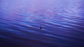 De visserij van vlotter in het meer stock footage