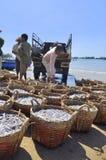 De visserij wordt gevestigd op het strand in vele manden wachtend op het uploaden op de vrachtwagen aan de verwerkingsinstallatie Stock Afbeeldingen