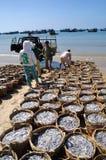 De visserij wordt gevestigd op het strand in vele manden wachtend op het uploaden op de vrachtwagen aan de verwerkingsinstallatie Stock Fotografie