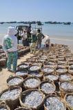 De visserij wordt gevestigd op het strand in vele manden wachtend op het uploaden op de vrachtwagen aan de verwerkingsinstallatie Stock Foto's