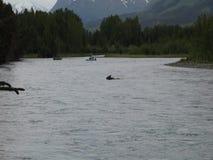 De vissers die op een Amerikaanse eland letten kruisen de Russische rivier in de lente