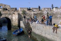 De vissers keren met hun vangst terug naar de bezige visserijhaven in Essaouira in Marokko Royalty-vrije Stock Afbeeldingen