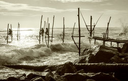 De vissers van de stelt in Sri Lanka Stock Foto's