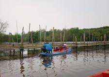 De vissers zitten op een oesterboot Het meest reforest mangrove royalty-vrije stock afbeelding