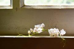 De vita blommorna på fönsterramen royaltyfri bild
