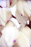 De vita blommorna på trädet Royaltyfria Bilder