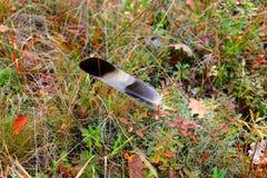 De Vlaamse gaai van de fotovogelveer in een opheldering in het hout Royalty-vrije Stock Foto's