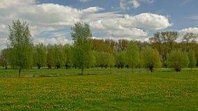 De Vlaamse lente lLandscape met weide met paardebloemen en pollarded wilgen royalty-vrije stock foto's