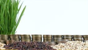 De vlag die van Belize met stapel geldmuntstukken en stapels van tarwe golven stock footage