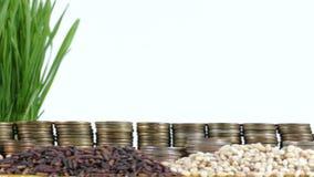 De vlag die van Marokko met stapel geldmuntstukken en stapels van tarwe golven stock videobeelden