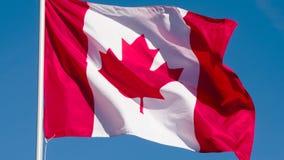 De vlag van de staat van Canada stock video