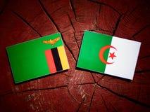 De vlag van Zambia met Algerijnse vlag op een geïsoleerde boomstomp royalty-vrije illustratie