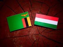 De vlag van Zambia met Hongaarse vlag op een geïsoleerde boomstomp vector illustratie