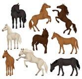 De vlakke vectorreeks bruine, beige en zwarte paarden in verschillend stelt Grote zoogdierdieren met hoofs, stromende manen en vector illustratie