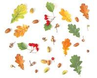 De vlakte van de herfstinstallaties legt patroon Stock Afbeeldingen