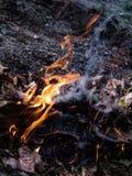 De vlam is de macht van het branden in wildernis Stock Fotografie