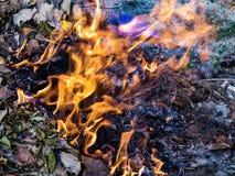 De vlam is de macht van het branden in wildernis Stock Foto