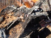 De vlammen kruipen op de kant van een stuk van brandhout in een open kampvuur stock foto