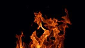 De vlammen van de brand op zwarte achtergrond stock video
