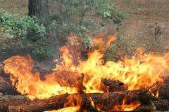 De vlammen van de vuurbrand Royalty-vrije Stock Afbeelding