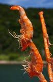 De vleespen van de garnaal Stock Foto