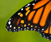 De Vleugel van de monarch Royalty-vrije Stock Foto's