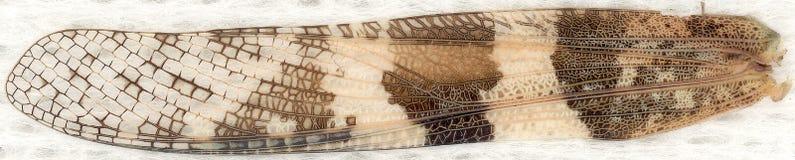 De vleugel van de veenmol royalty-vrije stock foto's