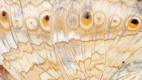 De vleugel van de vlinder royalty-vrije stock foto