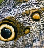 De Vleugel van de vlinder Stock Afbeelding