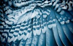 De vleugel van de vogel royalty-vrije stock fotografie